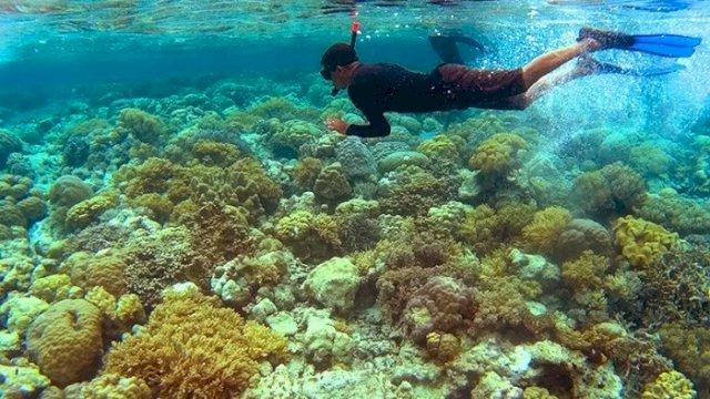 Wisatawan menyelam di titik selam Mari Mabuk, Pulau Tomia, Waha, Tomia, Wakatobi, Sulawesi Tenggara, Sabtu (5/11/2016). Pulau Tomia memiliki 30 titik penyelaman dan snorkeling dari 48 titik yang terdapat di Kabupaten Wakatobi yang oleh UNESCO telah ditetapkan sebagai pusat cagar biosfer dunia. ANTARA FOTO/Dewi Fajriani/kye/aa.