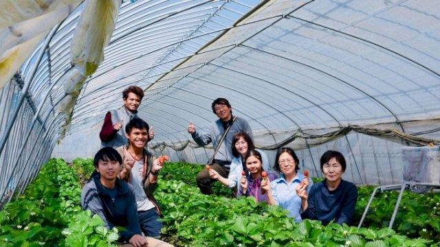 Sukri Andi (tengah, kiri) petani milenial Rongkong yang kini budidaya strawberry di Prefecture Gunma, Jepang.