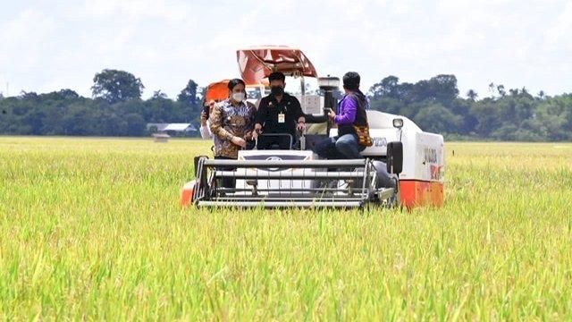 Menteri Pertanian Syahrul Yasin Limpo (SYL) melakukan panen raya padi di Kabupaten Maros, Sabtu, 20 Maret 2021.