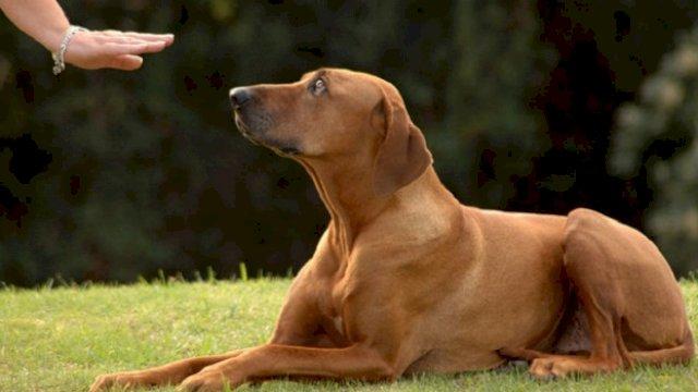 Ilustrasi anjing. ©Shutterstock/Anke van Wyk