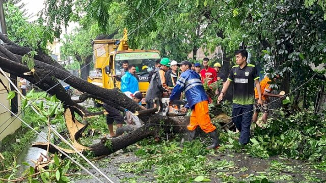Petugas dari Dinas Lingkungan Hidup Kabupaten Gowa mengevakuasi pohon tumbang yang menutupi jalanan, Jumat (2/4/2021).