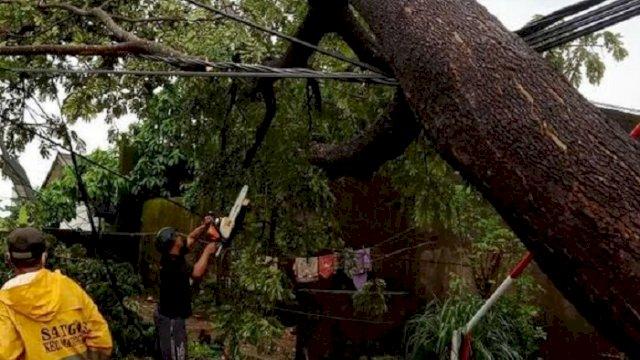 Petugas dari Dinas Lingkungan Hidup Makassar mengevakuasi pohon tumbang, Jumat (2/4/2021), akibat angin kencang. (int)