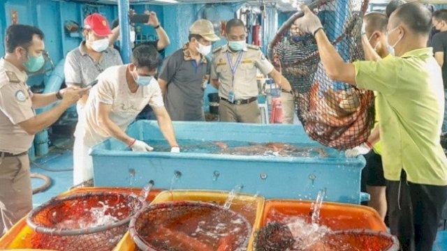 Di Tengah Pandemi, Selayar Ekspor Ikan Kerapu Hidup ke Hongkong